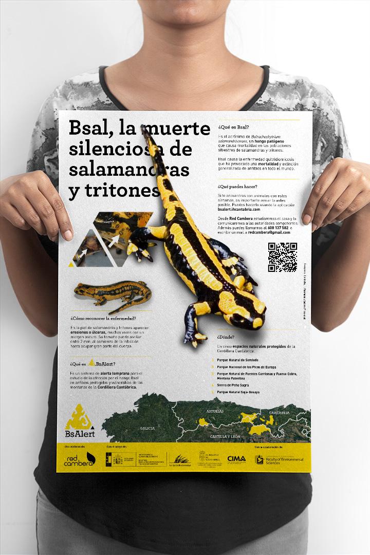 poster_Bsal